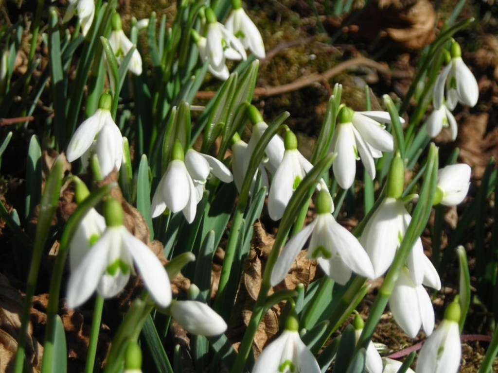 Збережемо рідкісні ранньоквітучі види рослин - 6 Березня 2014 - НПП